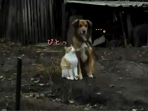 らぶらぶな猫と犬