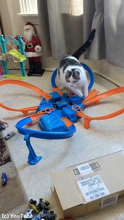 おもちゃに夢中な猫01