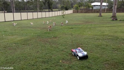 犬とラジコンカーと広い庭05
