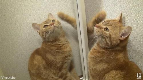 猫10匹と大きな鏡07