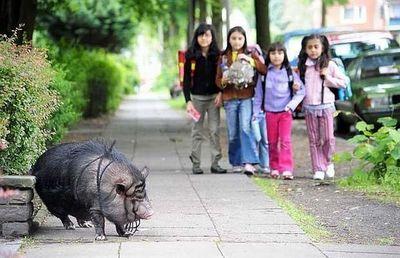 街中に現れた動物たち05