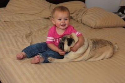 パグと赤ちゃん02