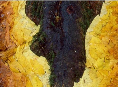 落ち葉の配置をアレンジ02