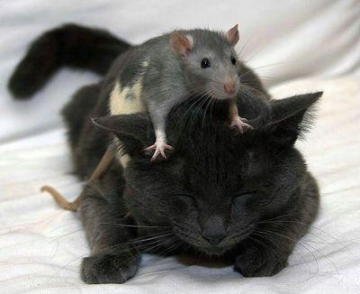 ネコとネズミ01