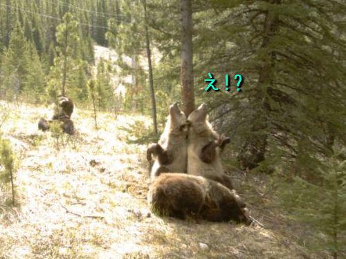 森のクマたちの秘密00