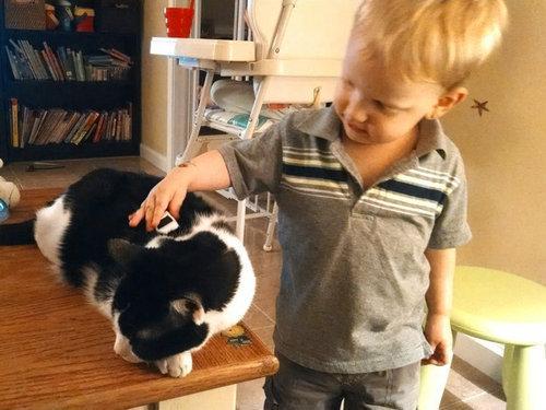 猫をぎゅーっとしたくなる写真16