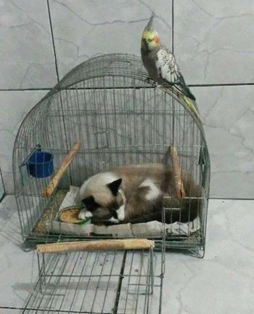 猫はどこでも寝る05