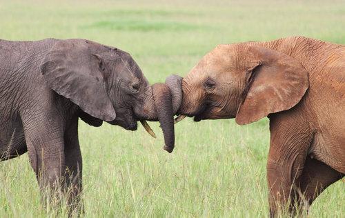 動物たちのキス17