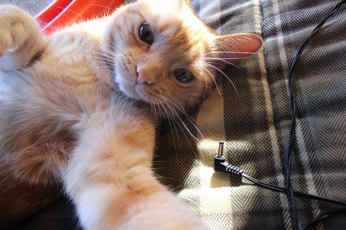 猫の自撮り15
