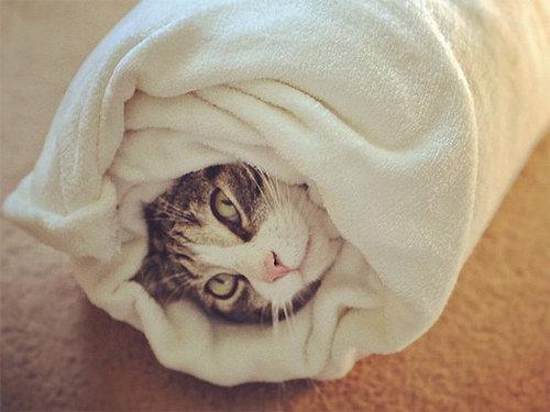 イモムシ猫16