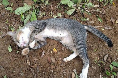 飼い主の墓に1年も居座り続ける猫03