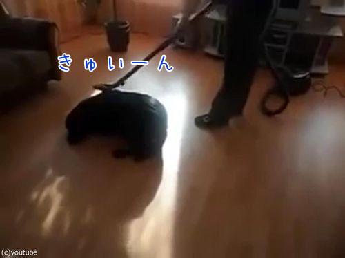 掃除機ラブな犬00