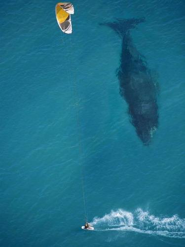 クジラの大きさ01