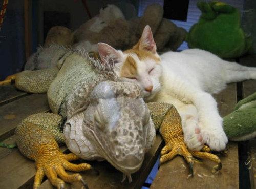 他の動物と仲良くする猫03