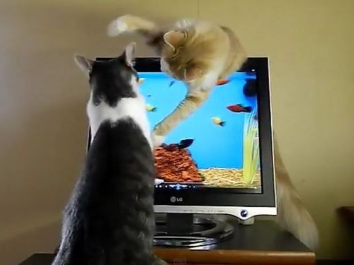 猫のモニタ画面・攻防戦03