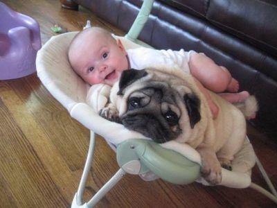 赤ちゃんとパグ