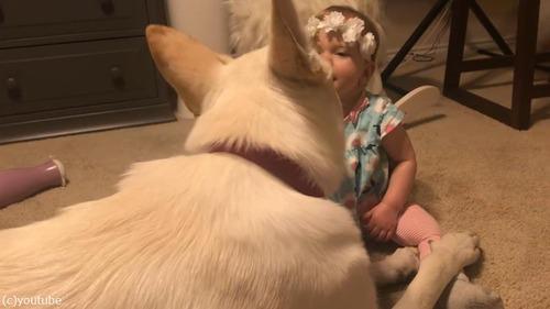 犬、赤ちゃんにキスのお返し03