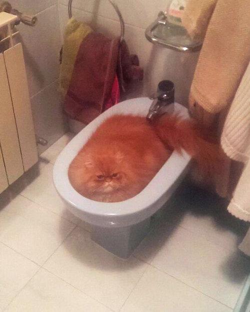 猫は液体説02