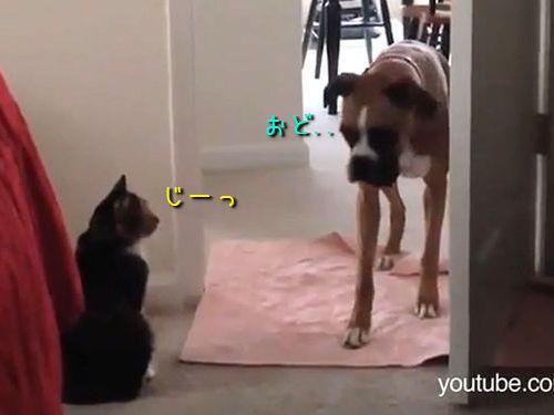 犬を通せんぼする猫00