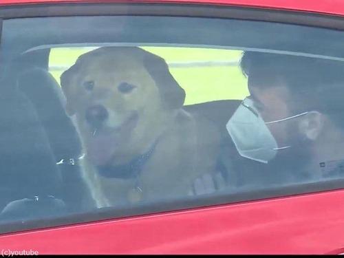行方不明の犬、100km離れた前の家にいた05