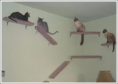 猫用の足場04
