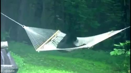 子グマがハンモックで遊ぶ02