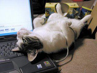 パソコンの上の猫04
