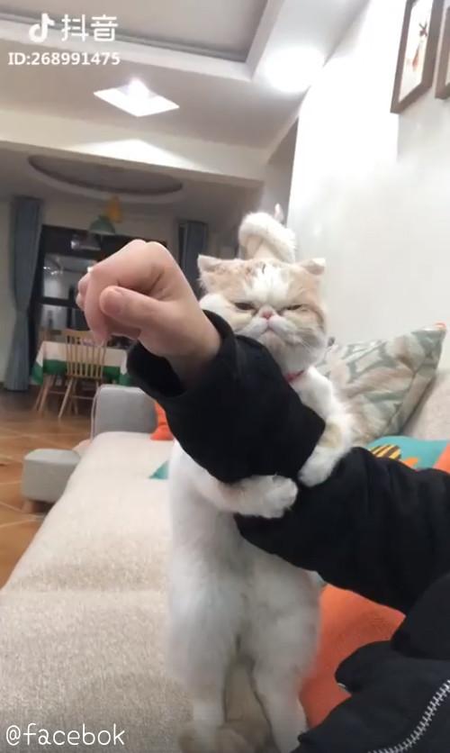 飼い主さんを離さない猫01