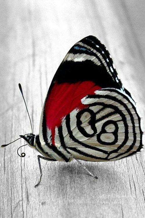 89番の蝶々04