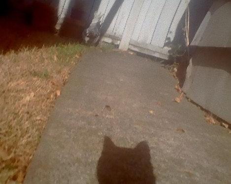 猫の視点29