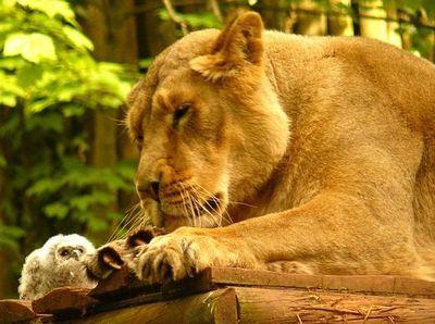 ライオンとフクロウ02