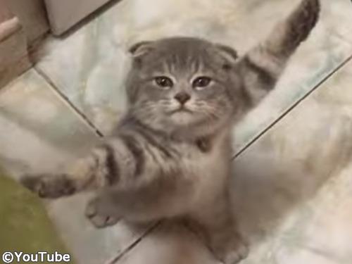 子猫を部屋で遊ばせてたら…とんでもニャいことになった00