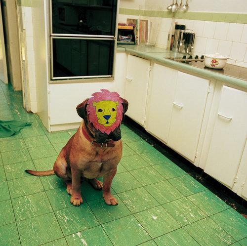 犬に猫マスク25