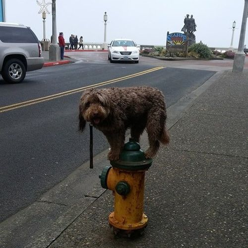 近所の犬06