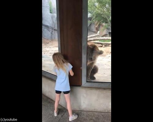 クマと少女のかくれんぼ03