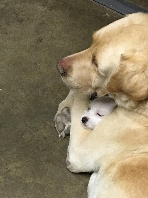 犬と子犬01