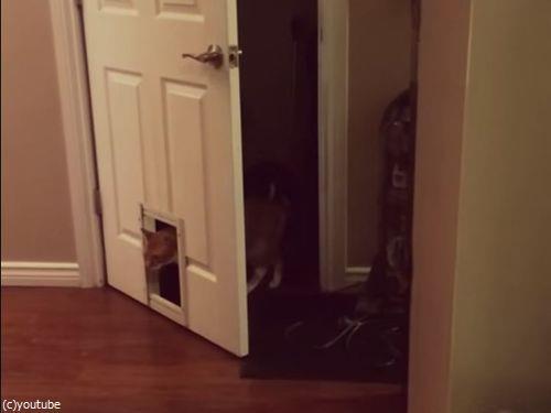 猫「なんで? なぜなんだよ!」03