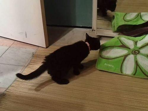 驚いて跳ぶ子猫01