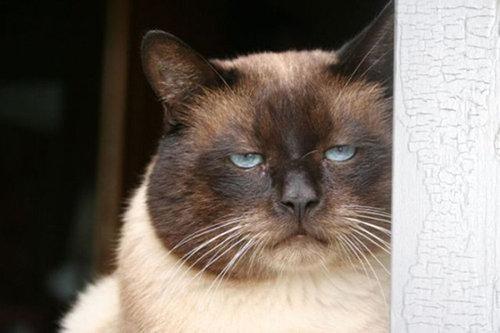 不機嫌な猫たち05
