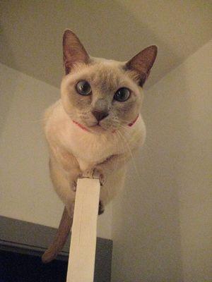 ドアの上の猫02
