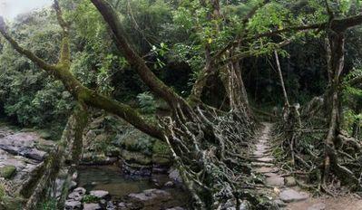 生きている橋07