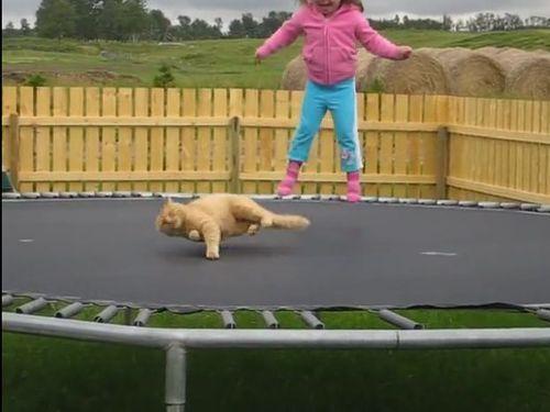 猫と少女とトランポリン01