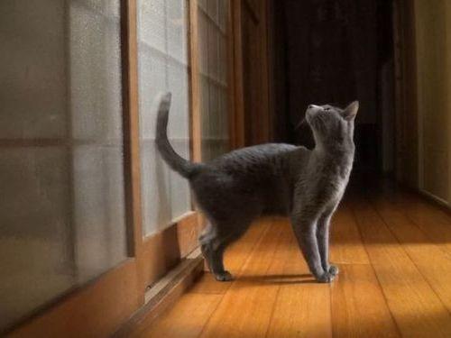 ガラス戸を開けて欲しい猫01