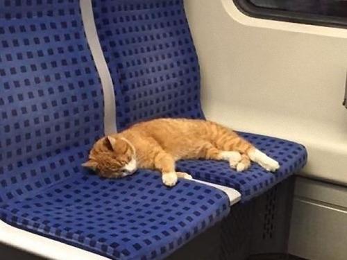 ドイツの電車に猫が乗ってる00