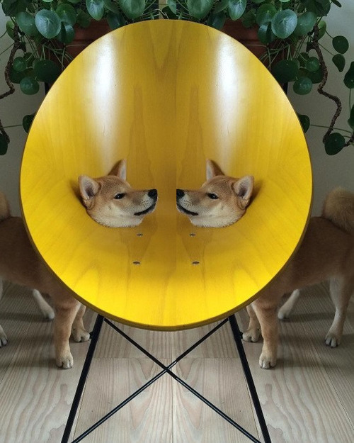 犬「これはちょっとしたミスです」02