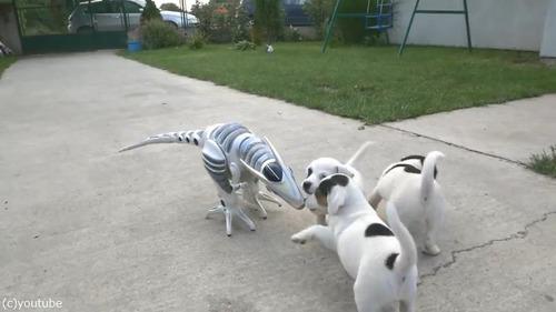 ロボ恐竜に戦いを挑む子犬たち02