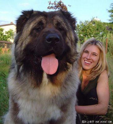 巨大な犬07