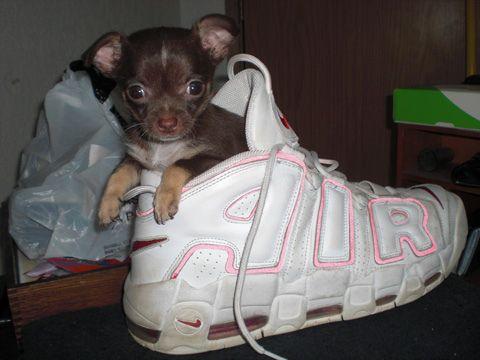 靴の中の犬03