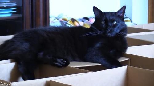 猫2匹にダンボール迷路をプレゼント06