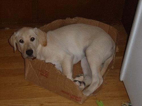 箱好きの犬12